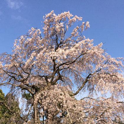 春の養生法
